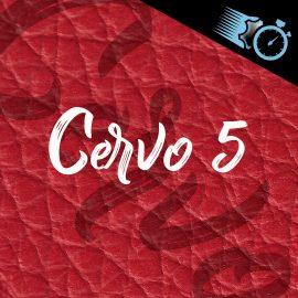 Cervo 5